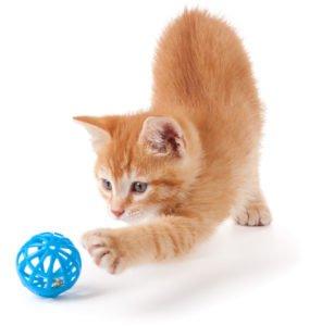 cat toy ringworm