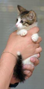 kitten ringworm