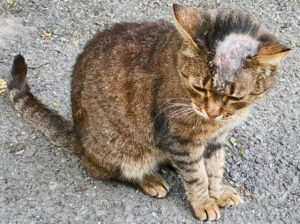 ringworm cat