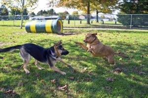 dog park rules